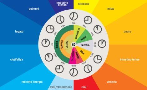 L'orologio degli organi | Seguire il sistema ritmico dell'universo
