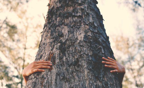 Elemento legno | I meridiani: Cistifellea e Fegato