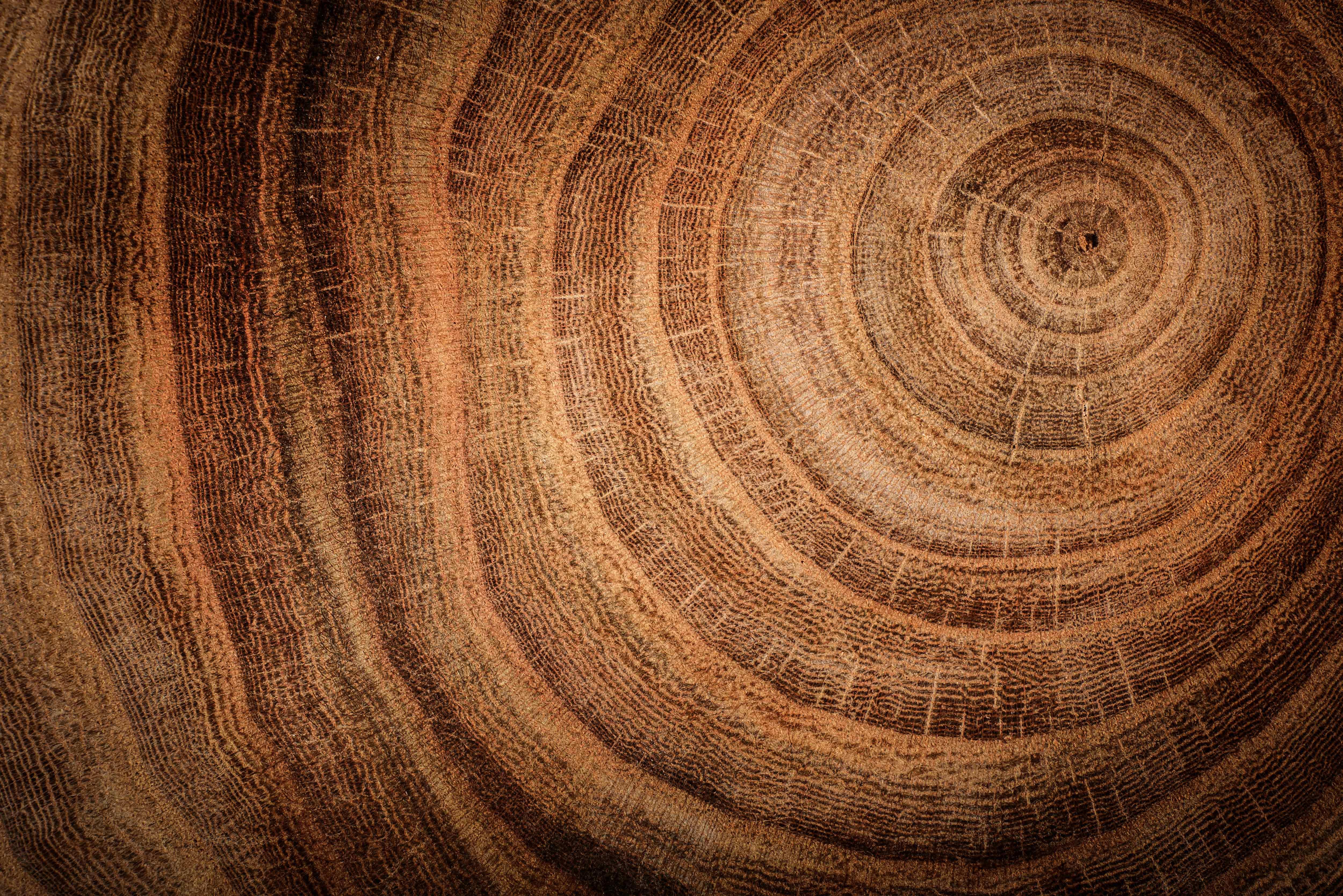 legno - 5 elementi