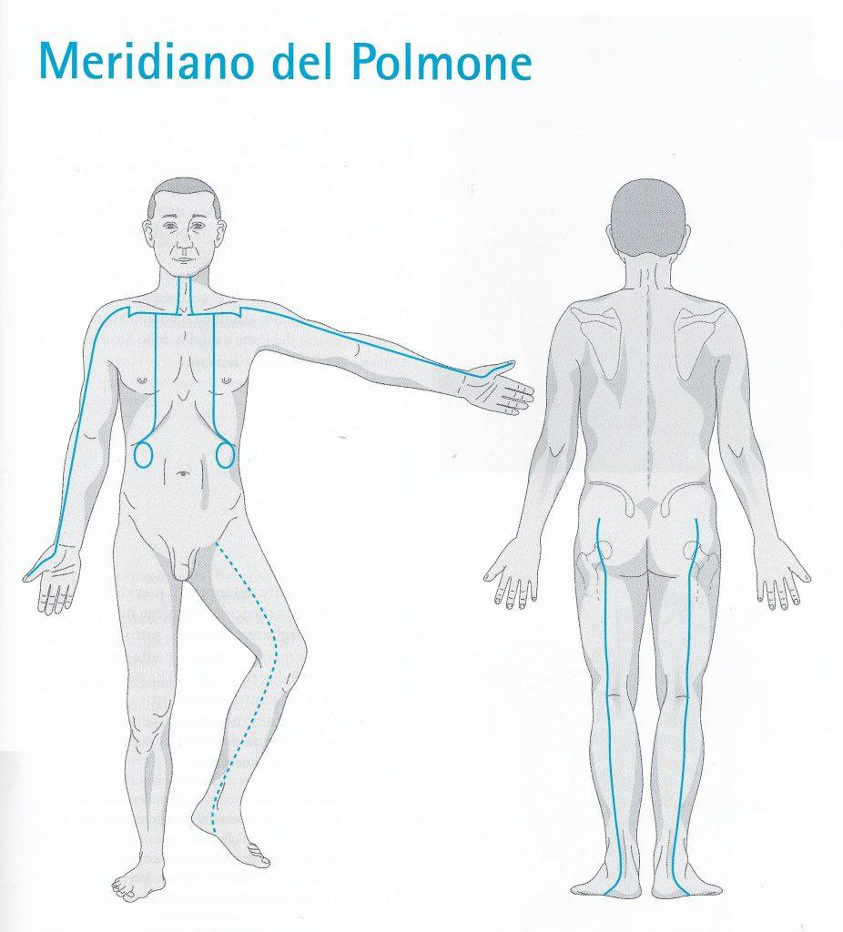Meridiano dei polmoni - percorso