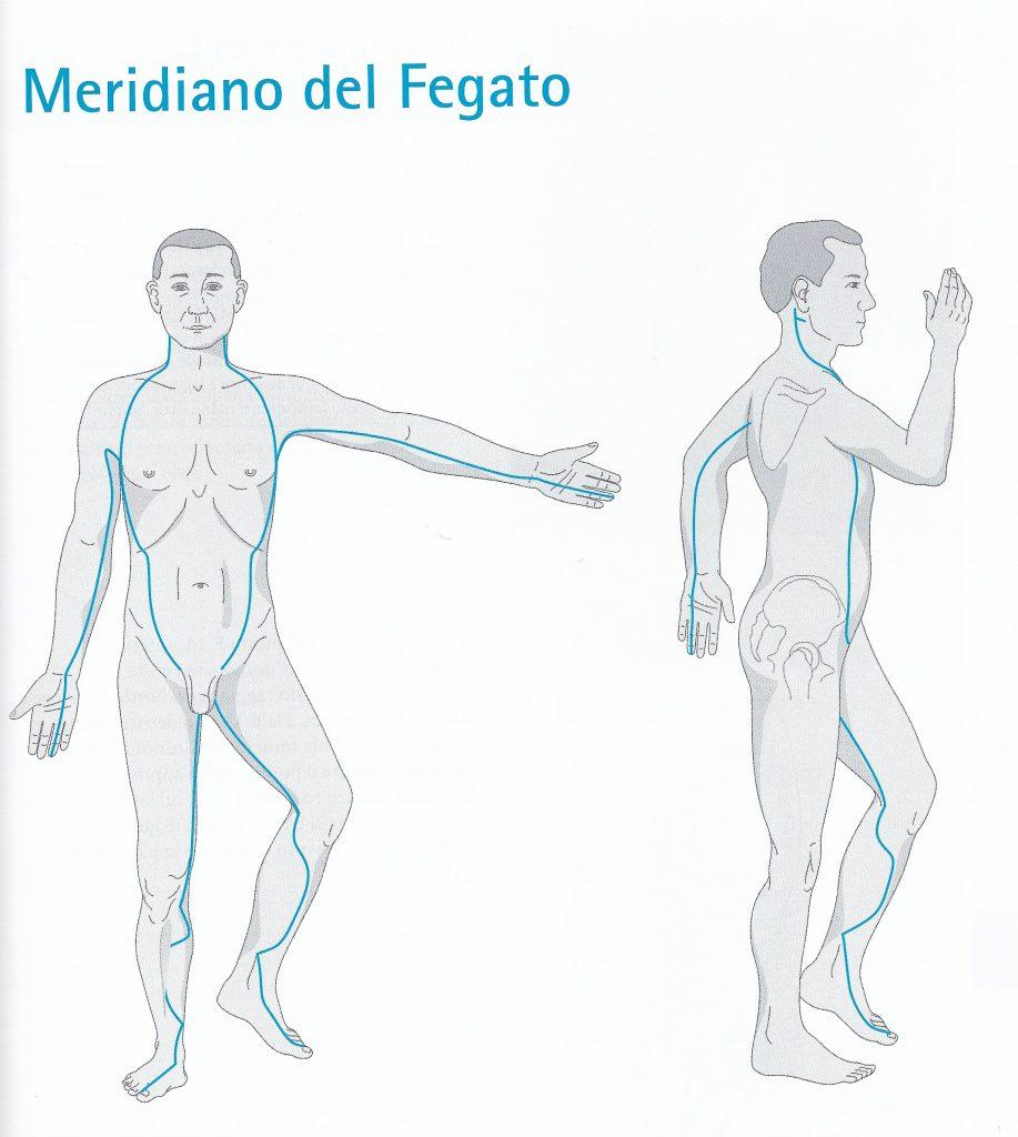 Meridiano del fegato - percorso