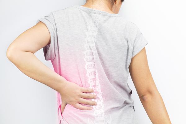 vertebre e significato - colonna vertebrale