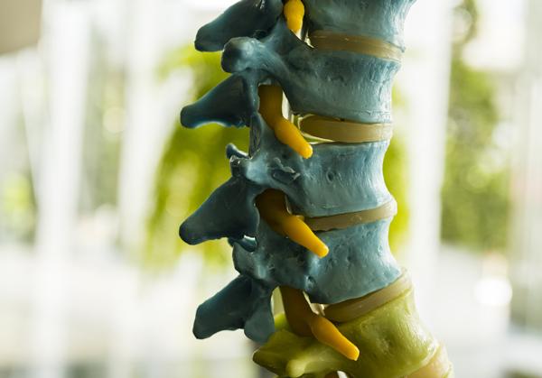 vertebre della colonna vertebrale