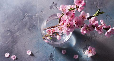 fiori di ciliegio giapponesi